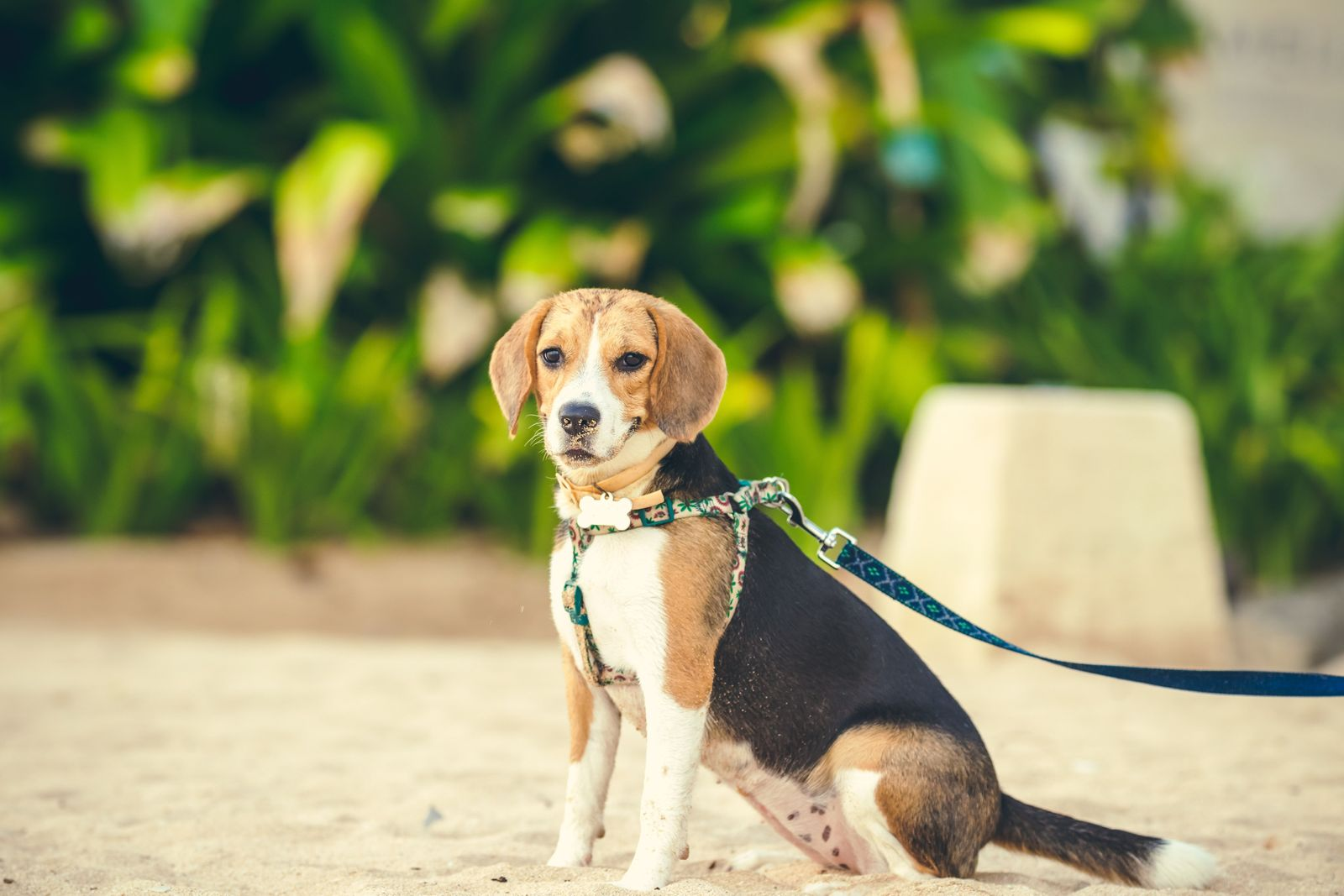 Ensuring your pet's comfort and safety while travelling - Vetster