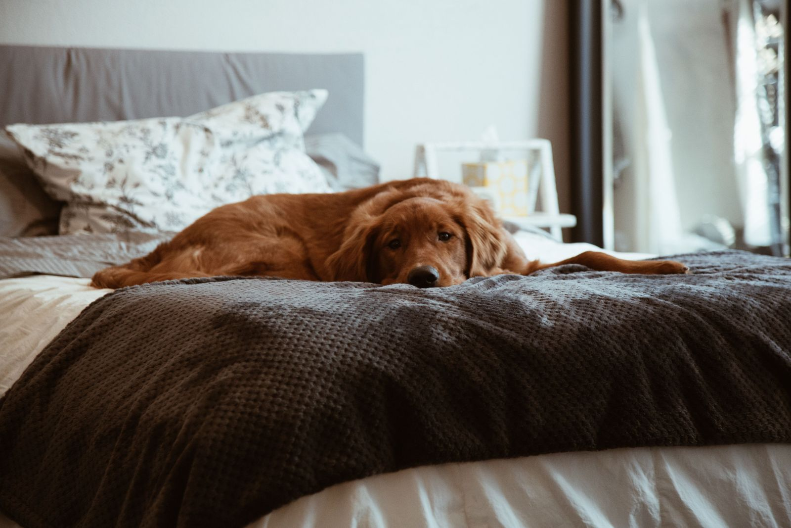Minimize separation anxiety as you prepare to return to work - Vetster