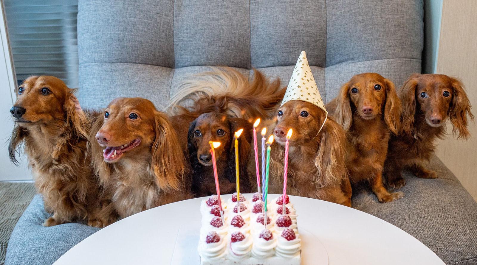 Trouvez votre raison de célébrer avec un rendez-vous de santé et de bien-être gratuit pour votre animal de compagnie!