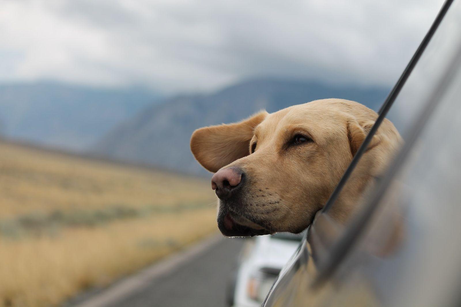 Vetster Telemedicine & Pet Wellness - Here when your pet needs us