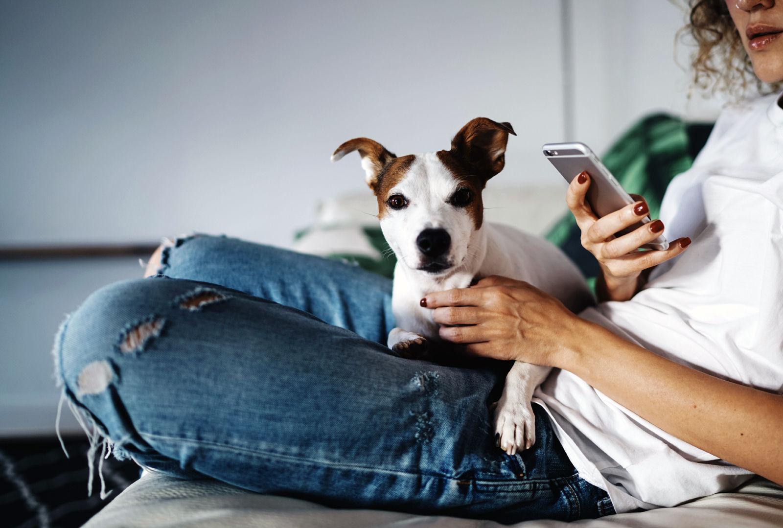 Vetster Telemedicine & Pet Wellness