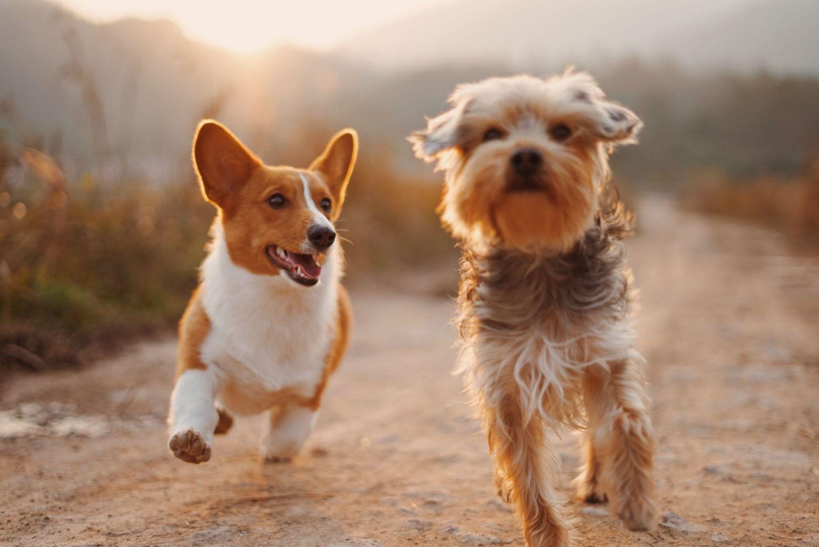 Tick prevention for pets - Vetster