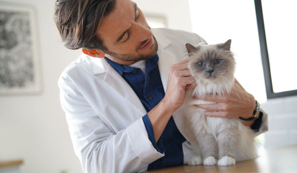 Join Vetster as a veterinary professional and start earning today!