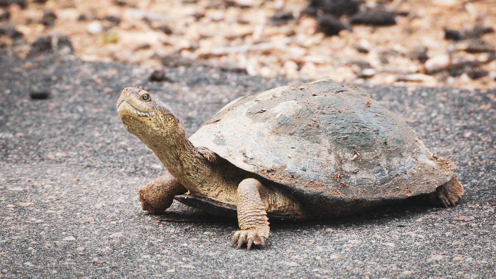 Parasites in turtles - Vetster