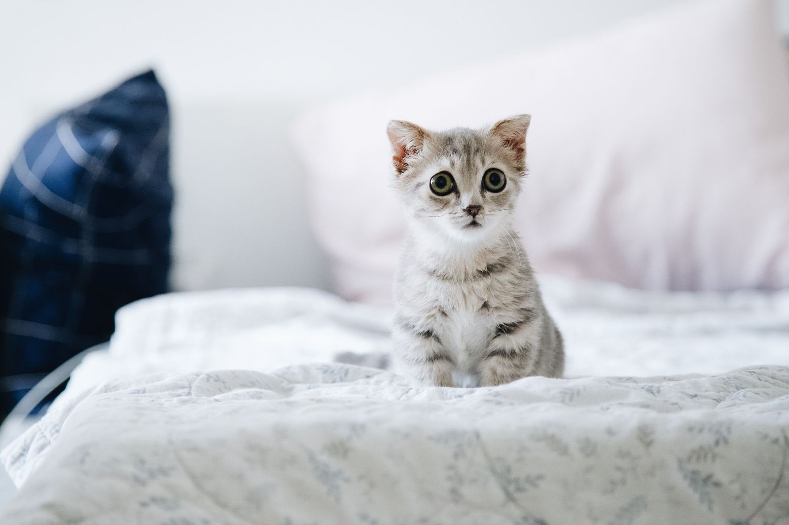 Diarrhea in Cats - Vetster