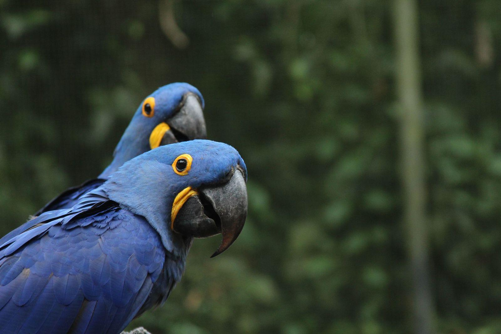 Gout in birds - Vetster