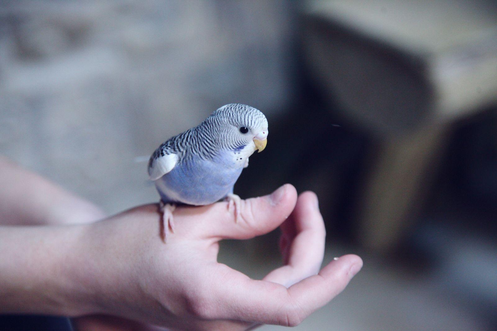 Giardiasis in birds - Vetster