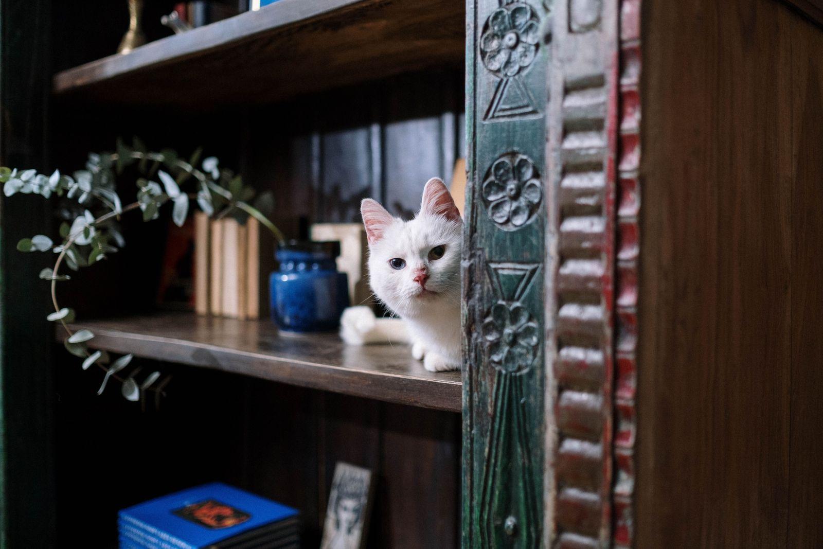 Corneal Ulcers in Cats - Vetster