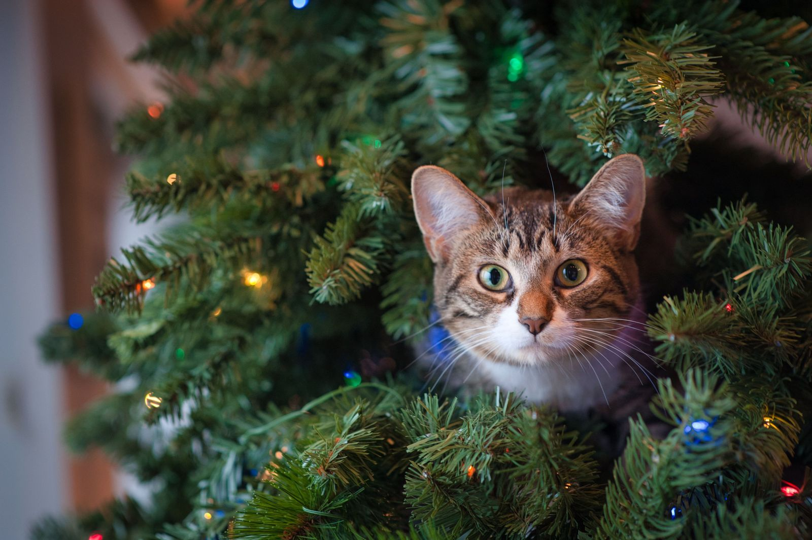 Holiday Safety for your Pet - Vetster
