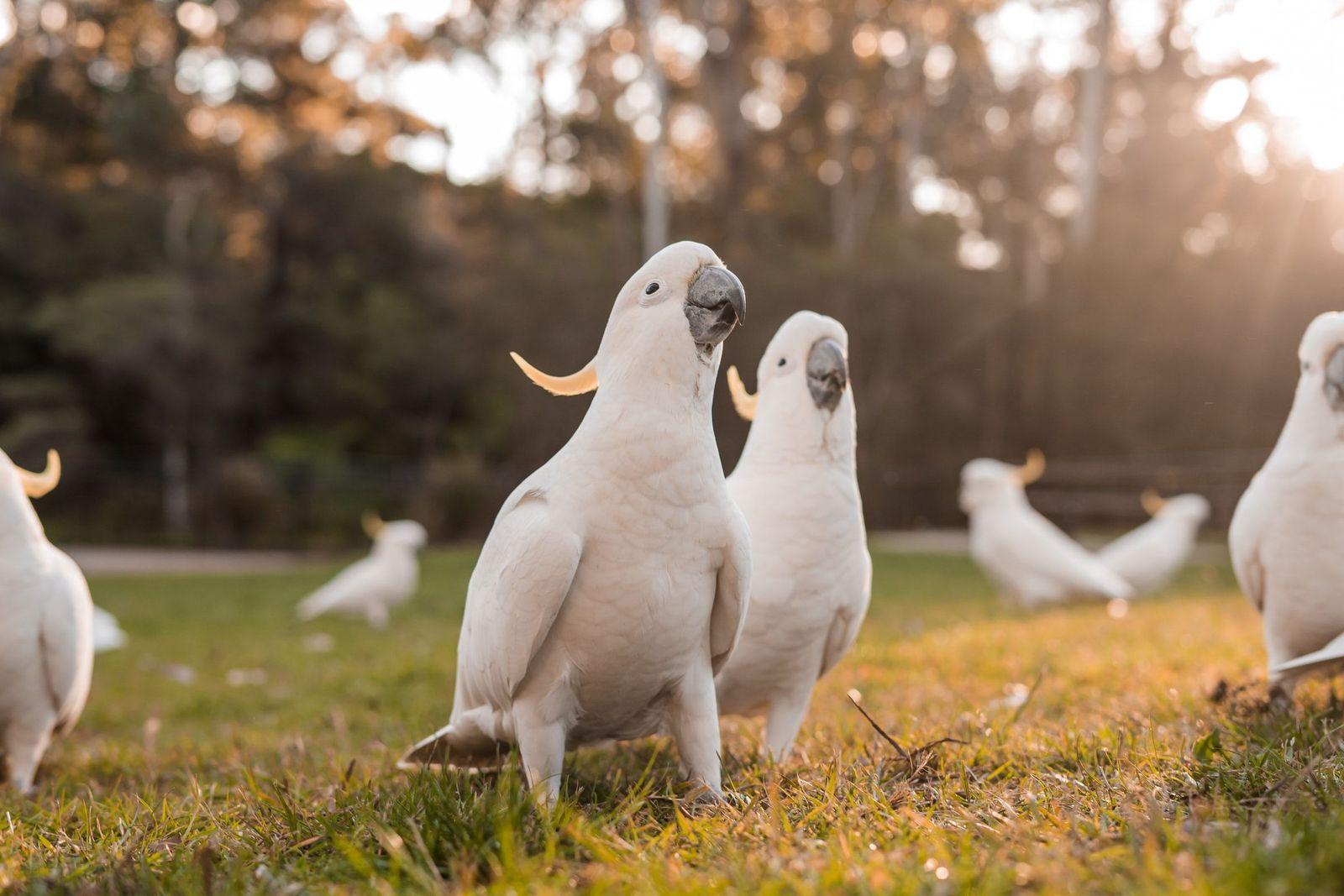 Feather plucking in birds - Vetster