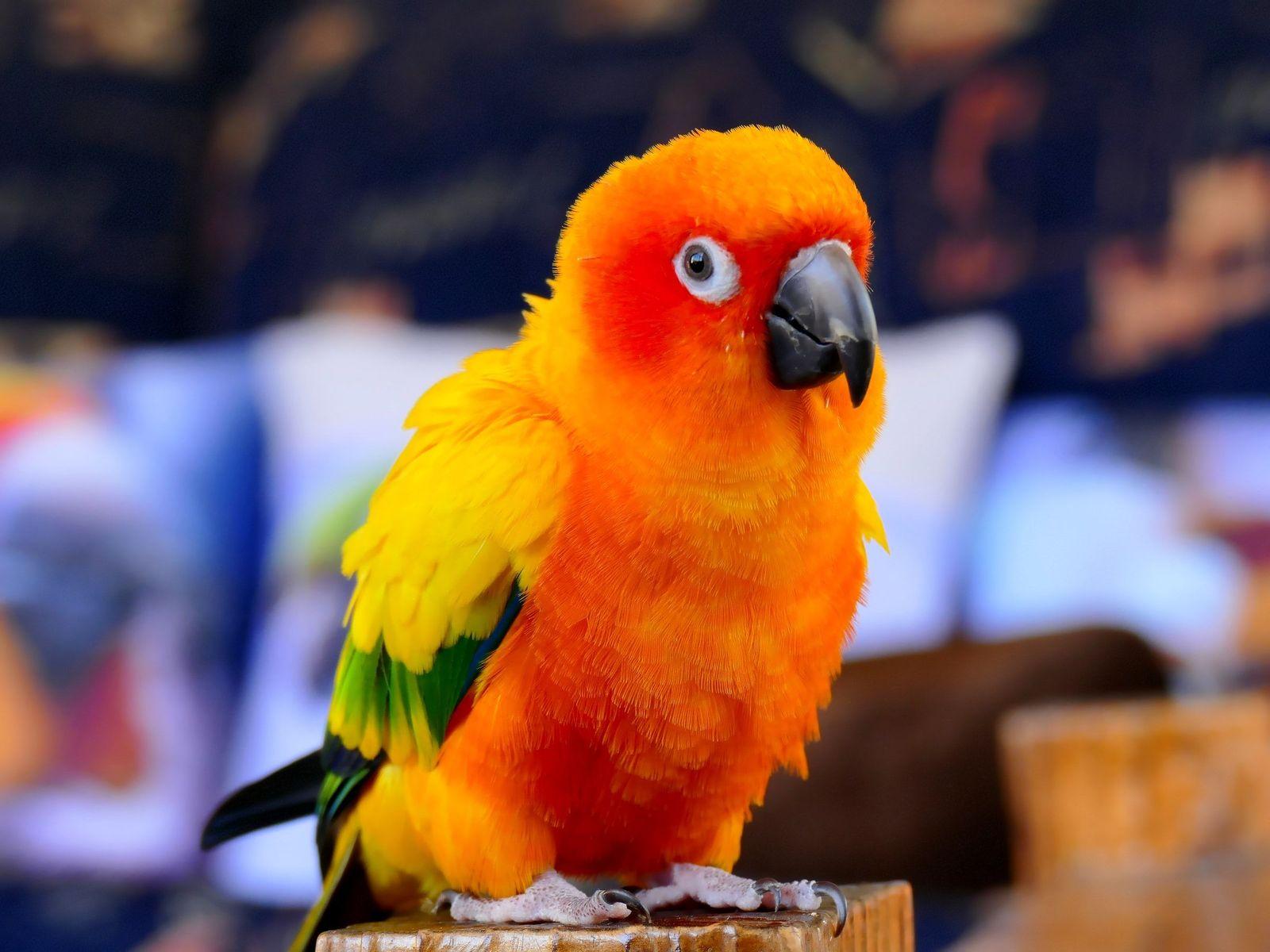 Psittacosis (parrot fever) in birds - Vetster