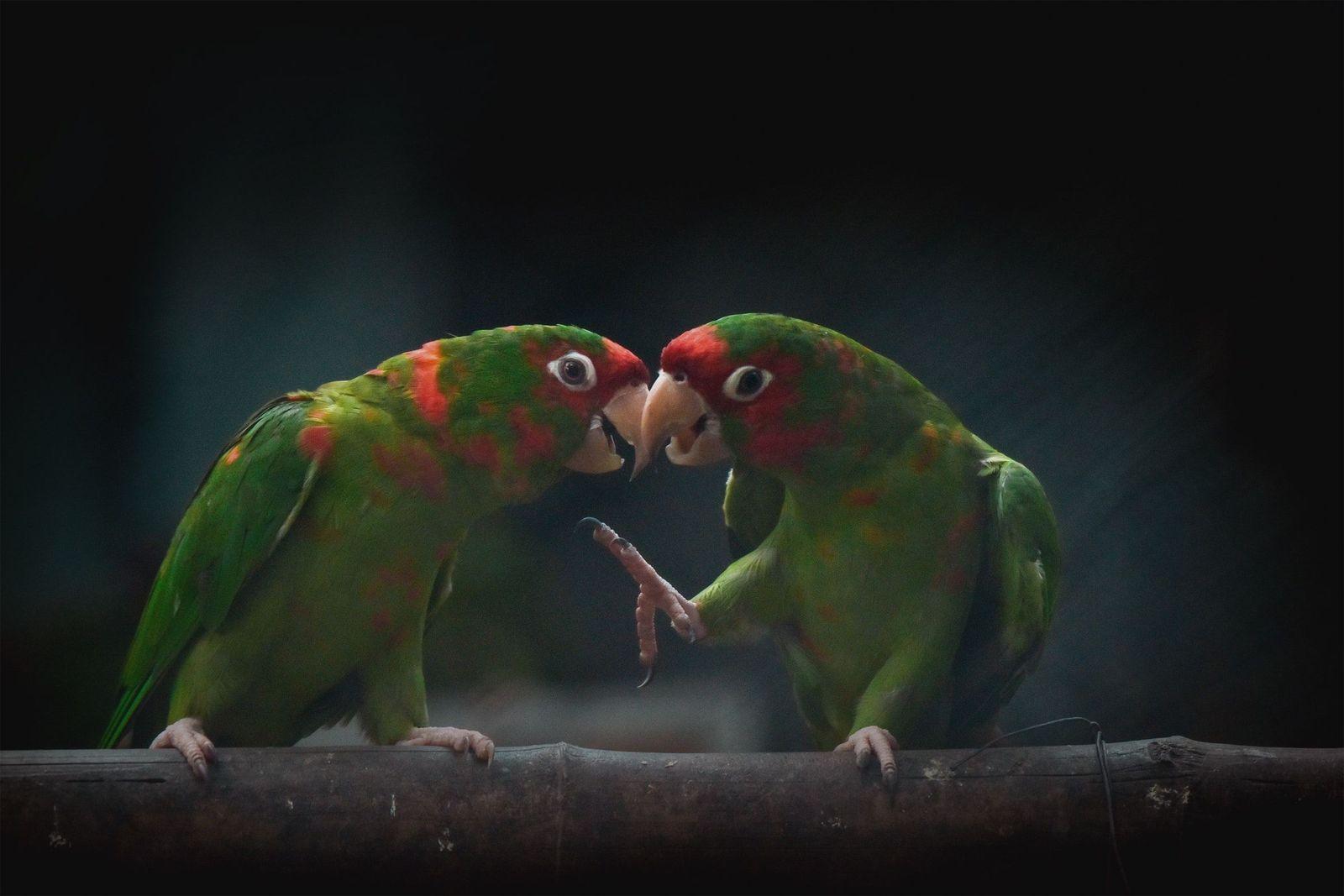 Trichomoniasis in birds - Vetster