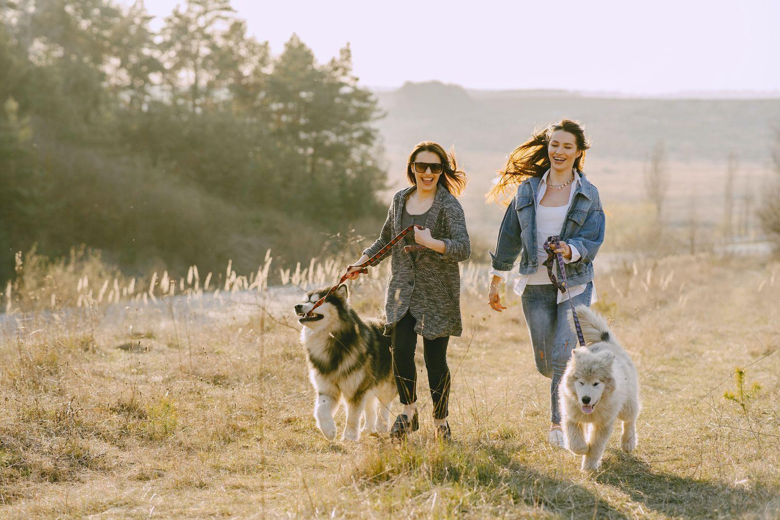 Osteoarthritis in dogs - Vetster