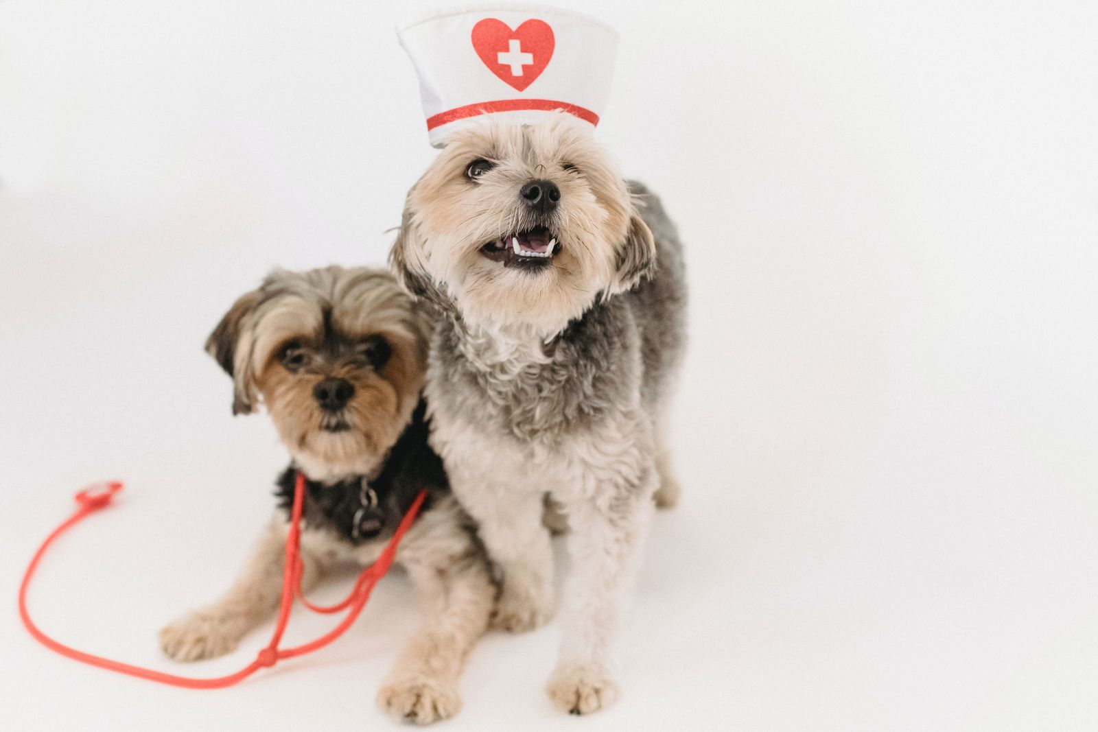 Managing Prescriptions on Vetster (Canadian Veterinarians) - Vetster
