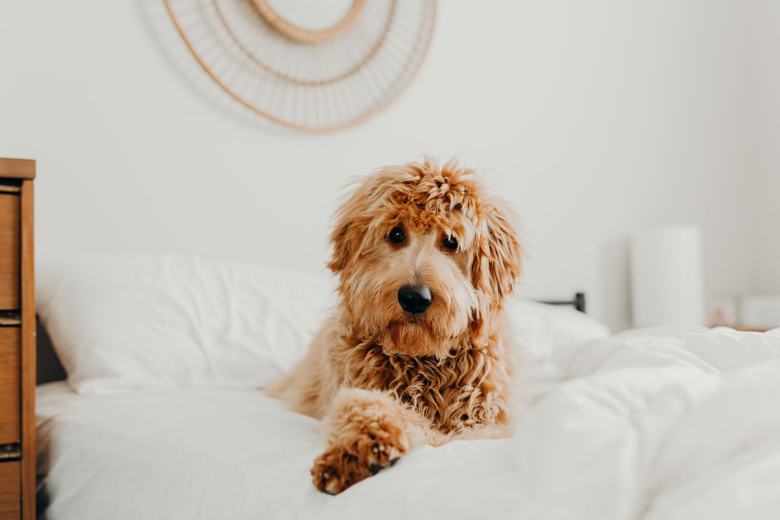 How veterinary telemedicine improves quality of life in pets - Vetster