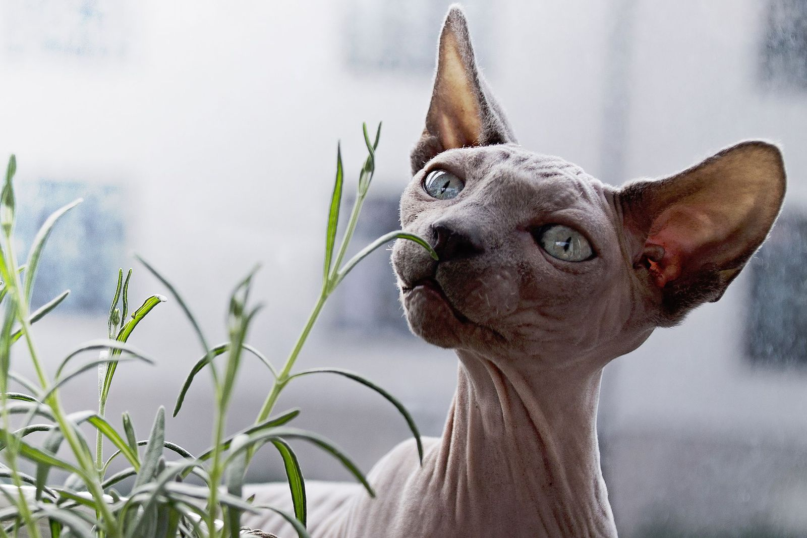 Cataracts in cats - Vetster