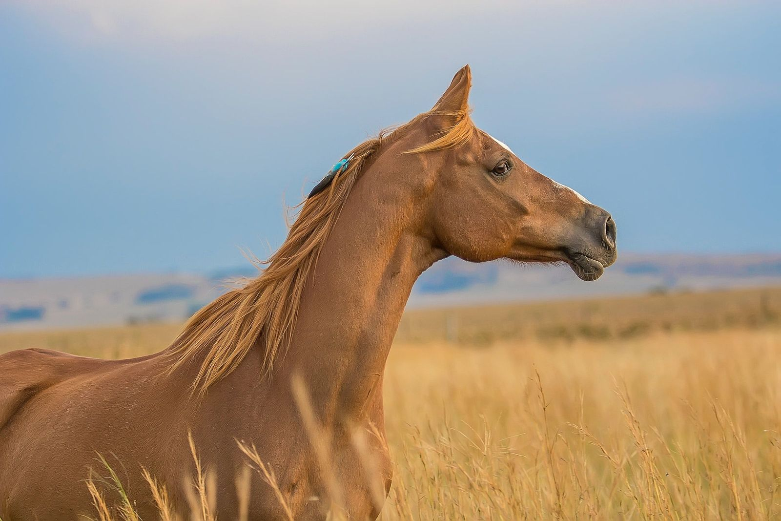 Heart disease in horses - Vetster
