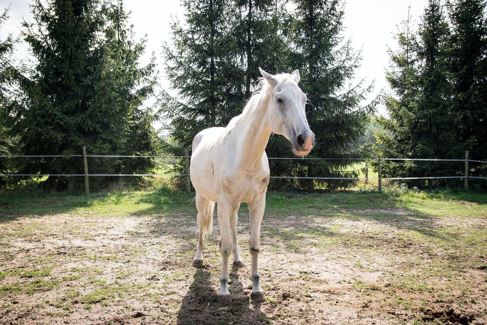 Aspiration pneumonia in horses - Vetster