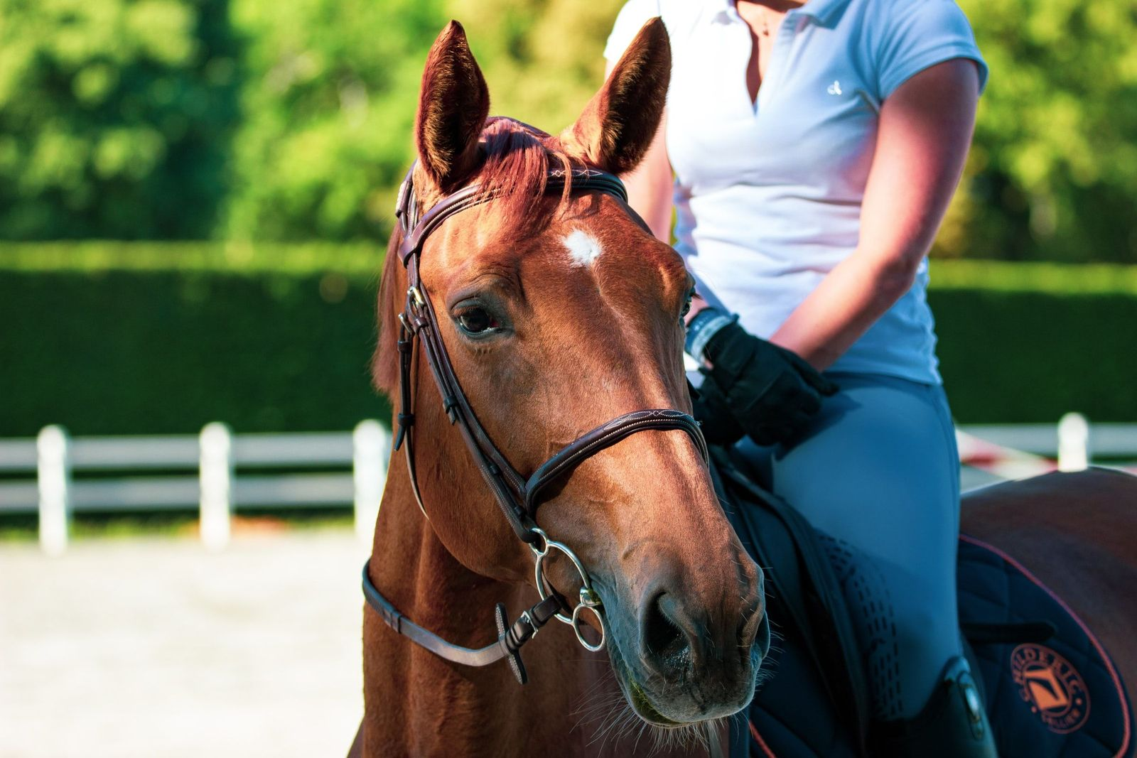 Contusions in horses - Vetster