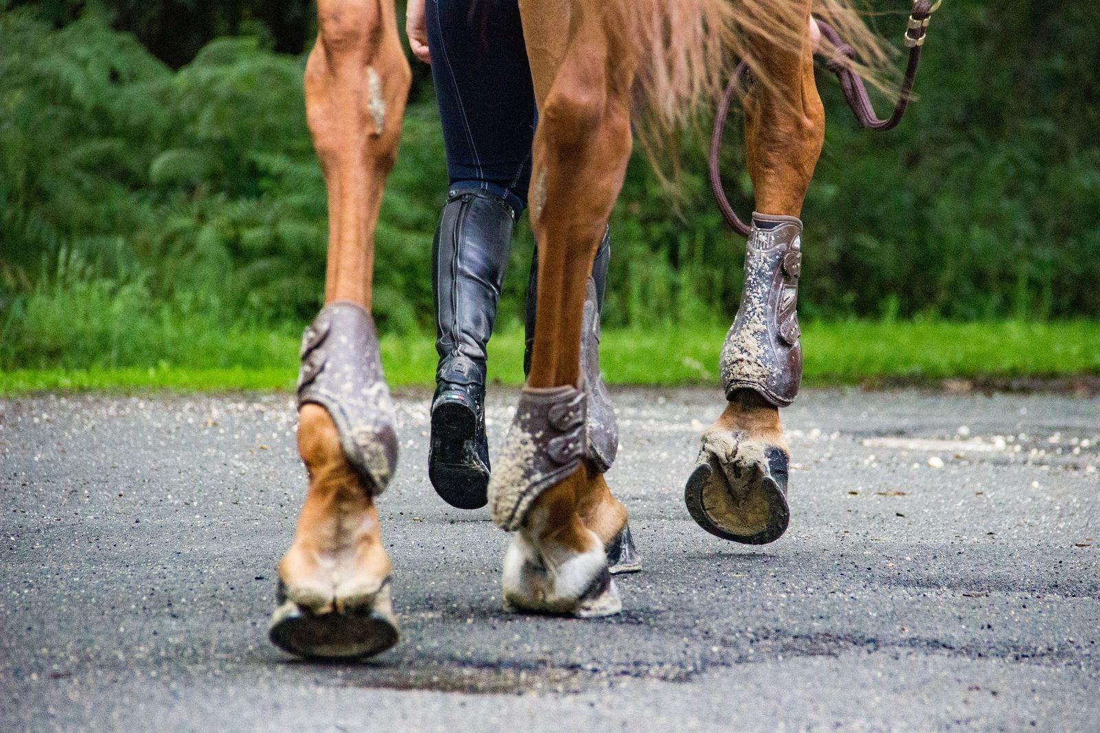 Carpitis in horses - Vetster