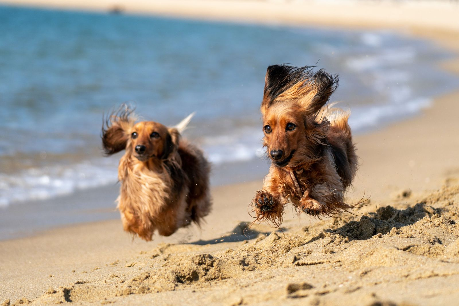How to Protect your Pet From Extreme Heat - Vetster