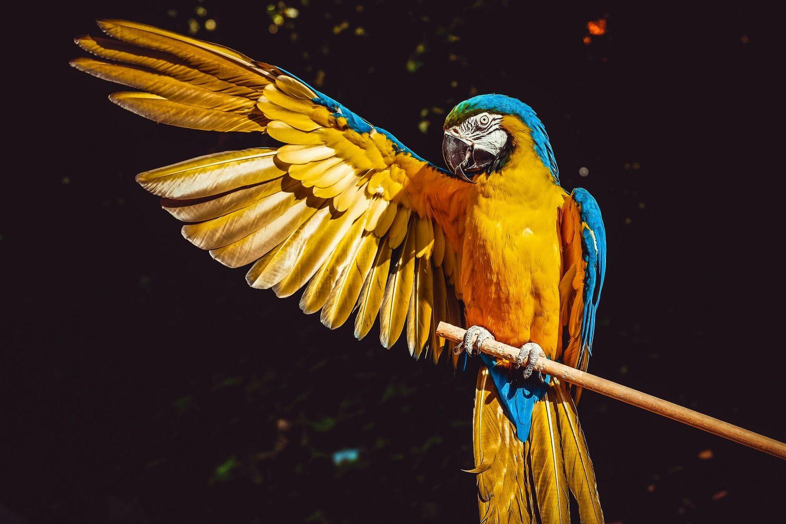 Proventricular dilatation disease (PDD) in birds - Vetster