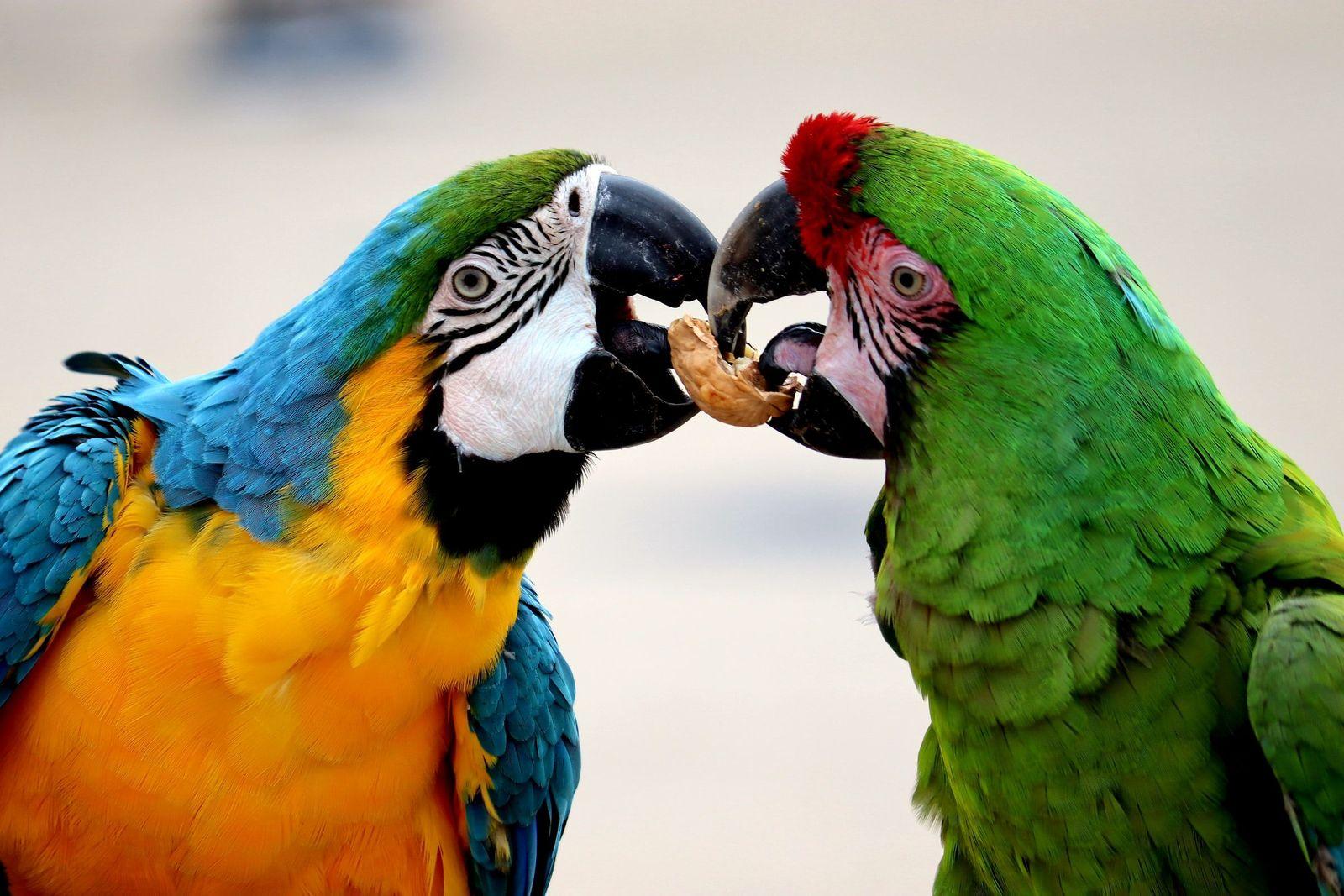 Polyomavirus in birds - Vetster