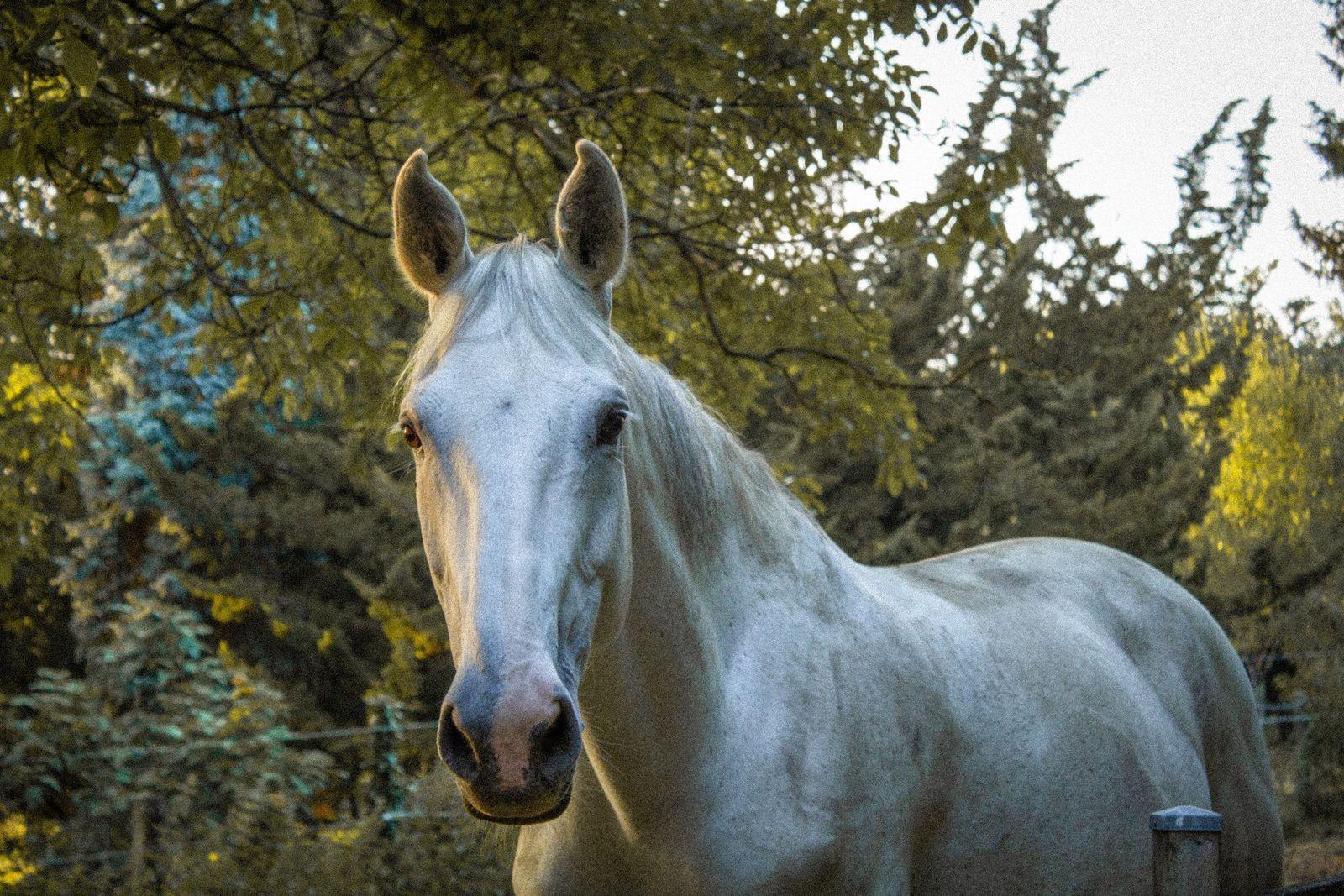 Cancer in horses - Vetster