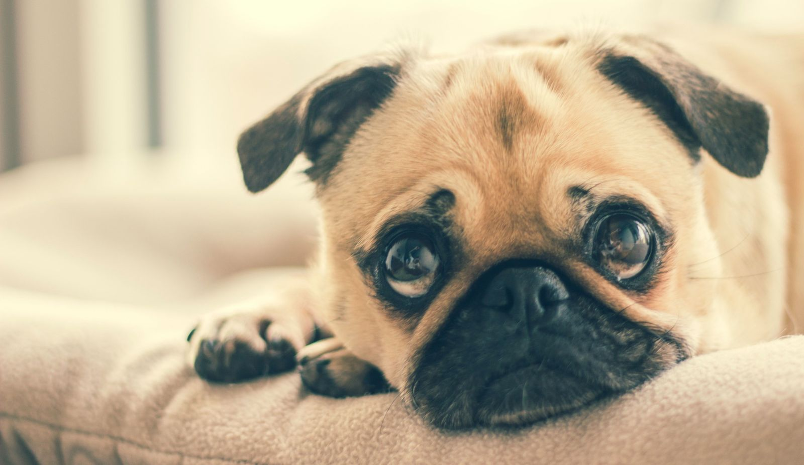 Rocky Mountain Spotted Fever in dogs - Vetster