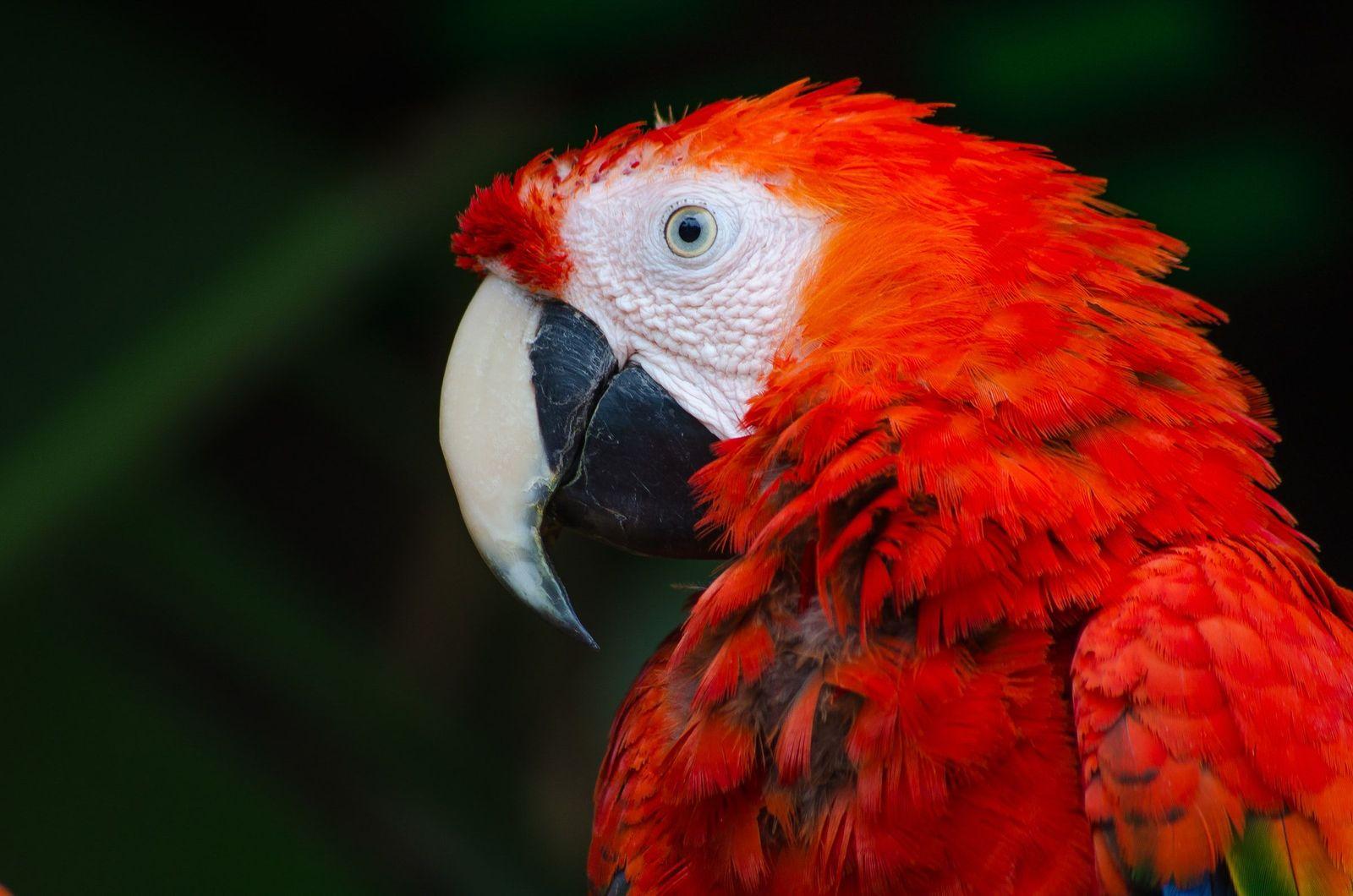 Avian influenze (bird flu) - Vetster