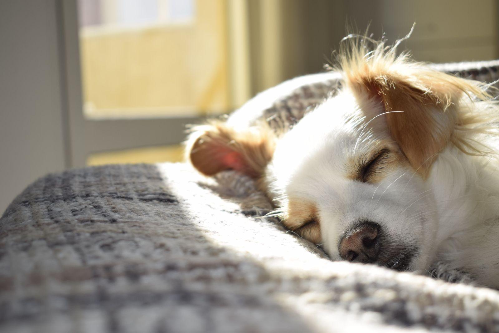 Leptospirosis in dogs - Vetster