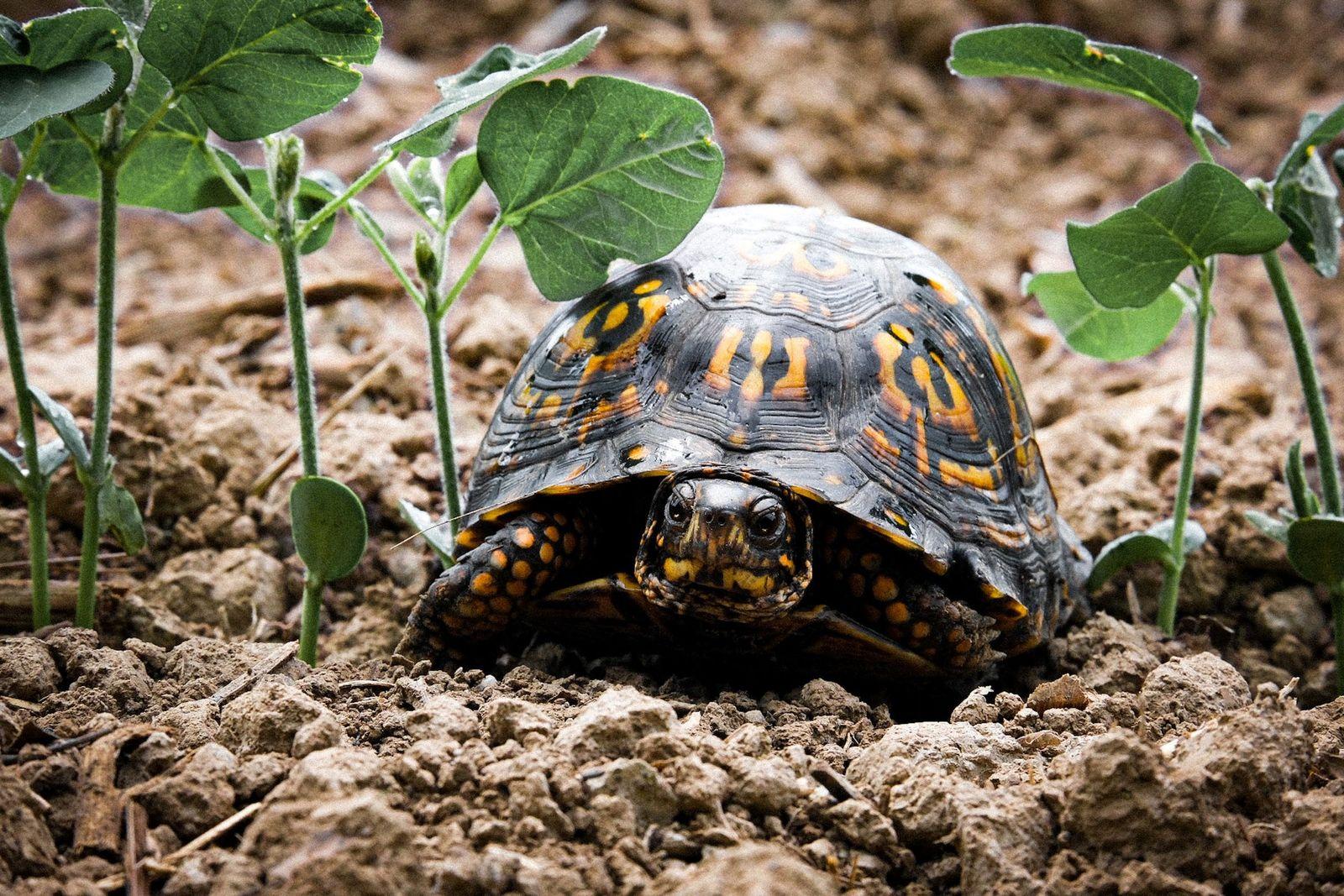 Ulcerative shell disease in turtles - Vetster